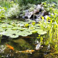 pond-10