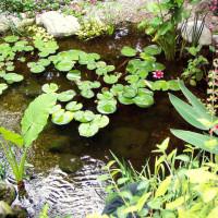 pond-8